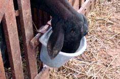 manejo nutricional de ovinos
