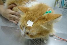 Nutrição de gatos hospitalizados