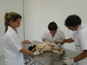 Vídeo da Apresentação do Curso de Dermatologia em Cães e Gatos