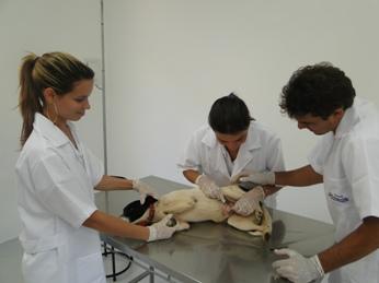 Curso de Dermatologia em Cães e Gatos
