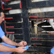 Exame andrológico bovino importância dessa etapa fundamental para a reprodução bovina