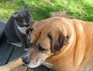 Cães e gatos hipertensos