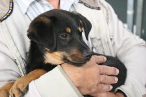 Como prevenir doenças nos pets