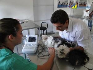 cardiologia em pequenos animais