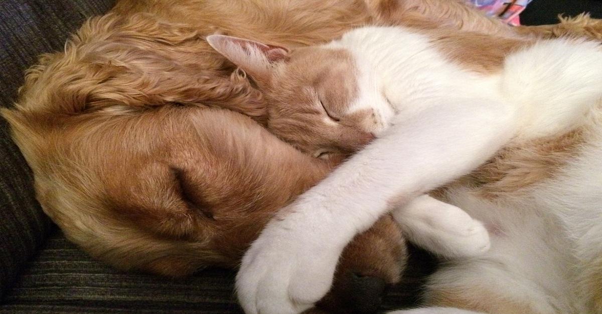 Cesariana em cães e gatos