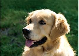 cachorro consegue identificar o cancer