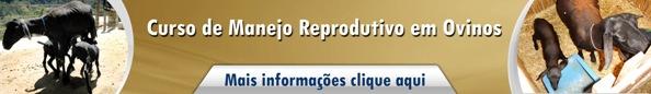 Manejo Reprodutivo em Ovinos2