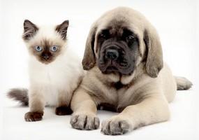Cuidados que devem ser seguidos para que o pet faça a castração