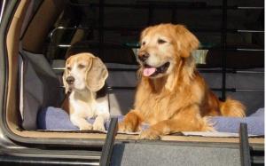 Dicas de transporte seguro nas viagens dos animais de estimação