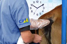 curso-de-inseminacao-artificial-em-tempo-fixo-em-bovinos-iatf-avancado