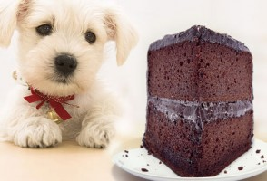 cão e chocolate
