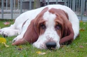 cão-triste (1)