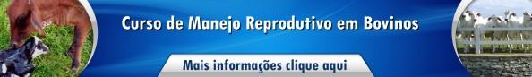 manejo reprodutivo bovinos - Cópia