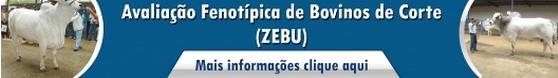 Avaliação fenotípica de bovinos de corte (Zebu)