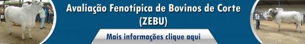Avaliação fenotipica de bovinos de corte (zebu)