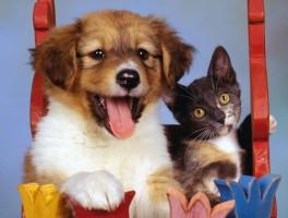 Fotógrafo especializando em clicar pets