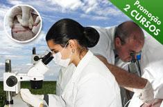 cursos-de-transferencia-de-embrioes-em-ovinos-e-inseminacao-por-laparoscopia-em-ovinos