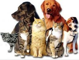 farmacologia em pequenos animais