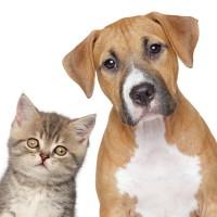 cão e gatos - novo