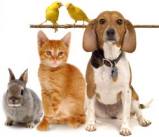 Apoio do CFM aos protestos no Brasil -pets