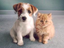 verminose e os danos causados ao animal