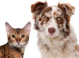 cão e gato