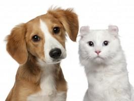 cao e gatos