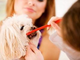 odontologia em caes e gatos1