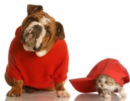 O mercado de pet shop e a humanização dos animais de estimação