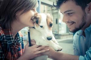 Os cuidados com os animais de estimação