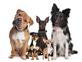 Pet shop um mercado em expansão