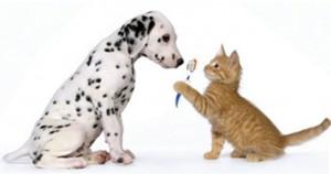 odontologia - cães e gatos
