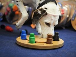 Saiba mais sobre os brinquedos para os cães