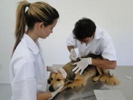 Sarna demodécica em cães