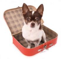 cachorro-e-mala