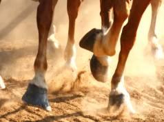 Cuidados básicos para os cascos do cavalo