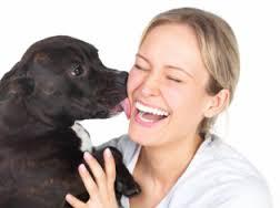 cão e veterinária - novo