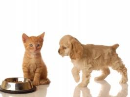 cachorro e gato comendo
