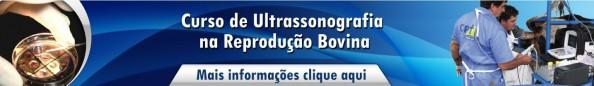 curso de ultrassonografia na reprodução bovina