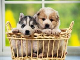 Cuidados a serem tomados para receber o animal de estimação
