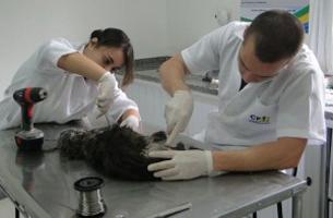Exame ortopédico em pequenos animais