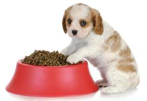 Manejo nutricional de cães e gatos