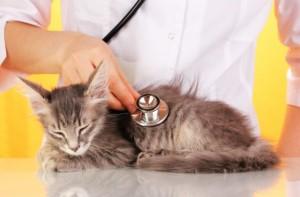 insuficiencia renal dos felinos
