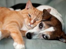 linfoma em pets