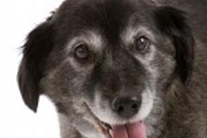 Alzheimer-em-cães