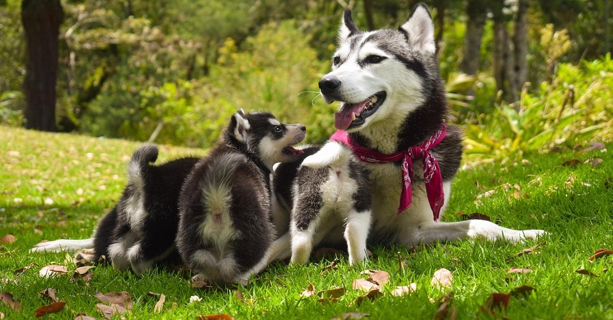 Diagnóstico de gestação em cadelas e gatas