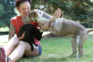 Cuidados destinados a animais amputados
