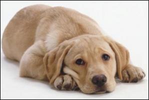 cachorro triste - novo