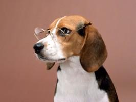 oftalmologia em cães