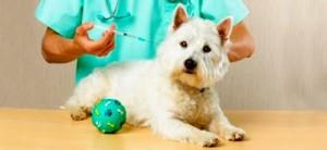 Os passos que devem ser seguidos na hora da vermifugação em cães